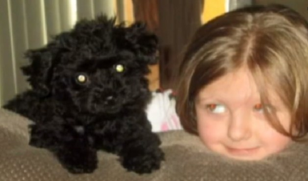 hero dog dies protecting family from bear