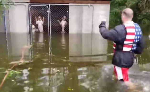 dogs rescued from kennel during Hurricane Florence