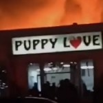 86 Puppies Rescued from Pet Store Fire