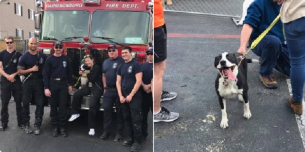 pit bull survived apartment fire