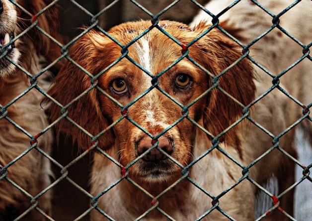 San Bernardino animal shelter closing