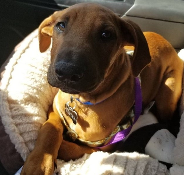 Sacramento police dispatcher adopts shelter therapy dog after tragedy