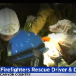 Firefighters Rush Dog Injured in Car Crash to Animal Hospital
