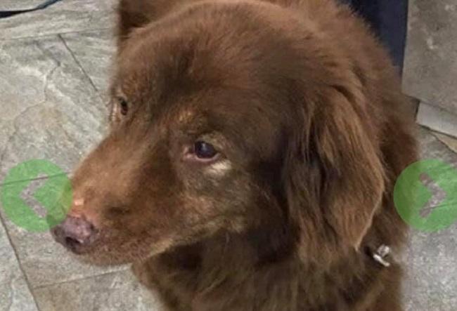 Sadie, 17-year-old deaf dog, rescued