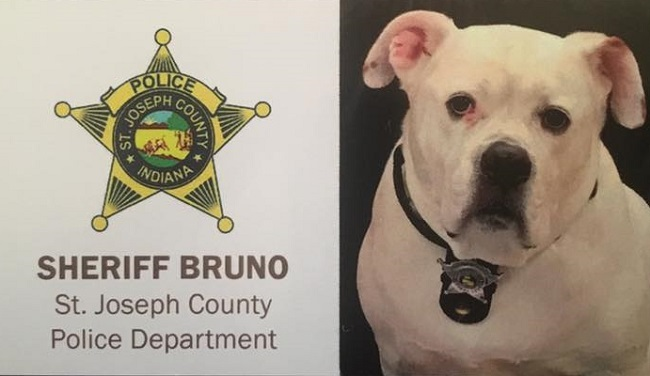 Sheriff Bruno, law enforcement comfort dog