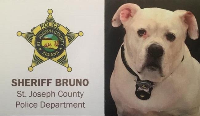 Sheriff Bruno, law enforcement comfort dog