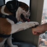 Allowing Dogs on Doorless NYC Helicopter Tours Is a Truly Terrible Idea