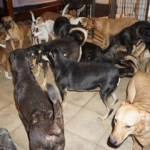 How to Help Dogs in the Bahamas Displaced by Hurricane Dorian
