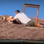 Raise the 'Woof?': Scared Dog Rescued from Top of Roof