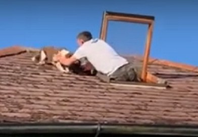 dog rescued from roof