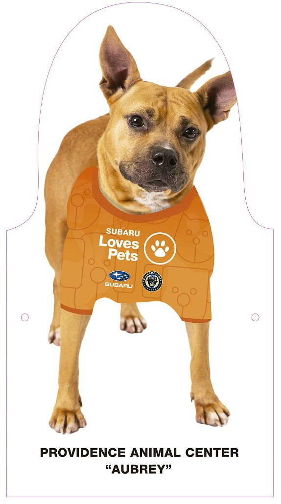 Subaru Stadium Adoptable Dogs: Aubrey