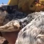 Firefighters Rescue Lost Dog During Southern California Wildfire