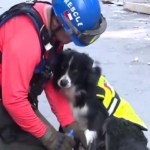 Border Collie Detects Possible Survivor One Month after Beirut Explosion