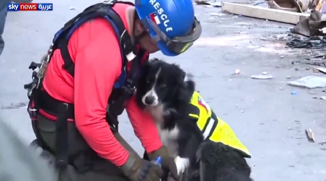 Border Collie leads rescuers to possible survivor 30 days after Beirut explosion