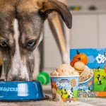 I Scream, You Bark: Ben & Jerry's Now Makes Doggie Desserts