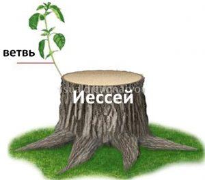 Отрасль из подрубленного корня Иессеева