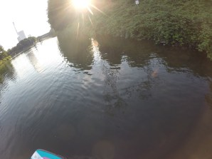 Goldfischen im Rhein Herne Kanal