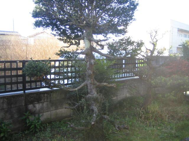 庭木伐根、お庭の片付け 前橋