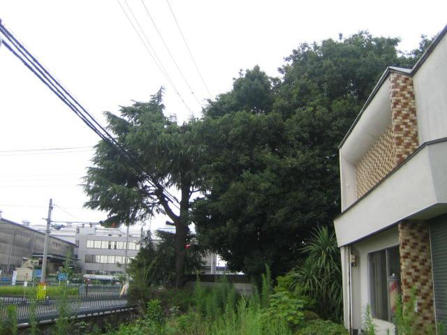 群馬 前橋 実家の大木10本を伐採してください
