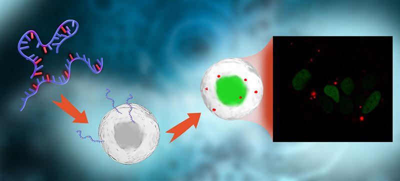Genombrott för att spåra RNA i celler