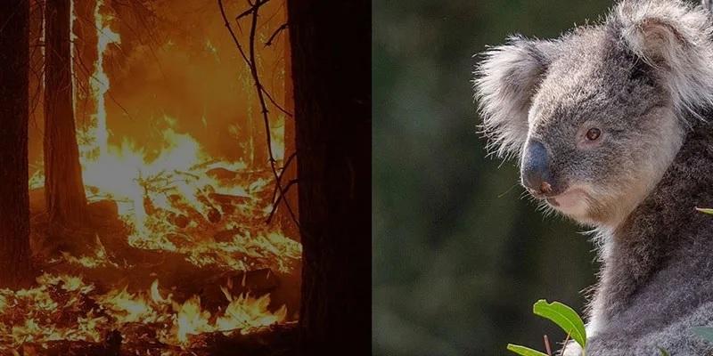 IVC Evidensia skickar veterinärhjälp till brandkatastrofen i Australien