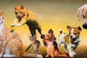 animals_dogs_cat_play_young_animals_puppy_jump_kitten-1390254