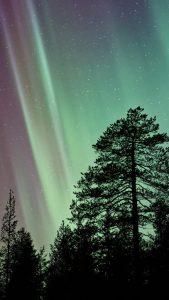 aurora-night-tree-nature-iphone-6-plus-576×1024