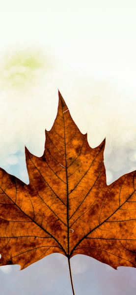 Fall-iPhone-XS-Max-wallpaper-unsplash-Kai-Oberhauser-768×1662