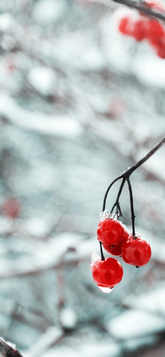 Winter-iPhone-XS-Max-wallpaper-unsplash-Maria-Mekht-768×1662