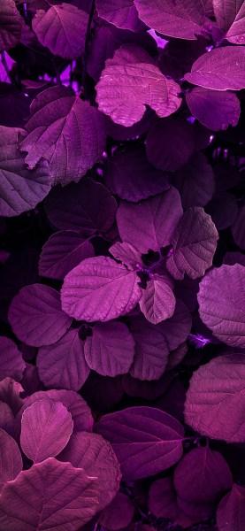 Nature-photography-iPhone-wallpaper-wallsbyjfl-magenta-leaves