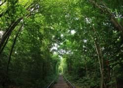 Tre strategier til at gøre din virksomhed grønnere og mere bæredygtig