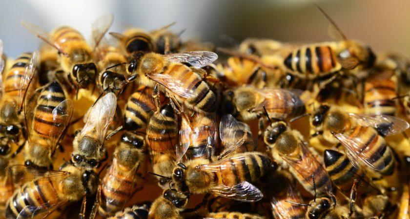 Tvisten om honungsmärket Manuka blir allt klibbigare