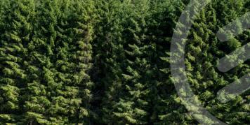 Biometria i samarbete med Academic Work för att digitalisera skogsindustrin 1