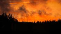 Nu ska smart teknik upptäcka skogsbränder