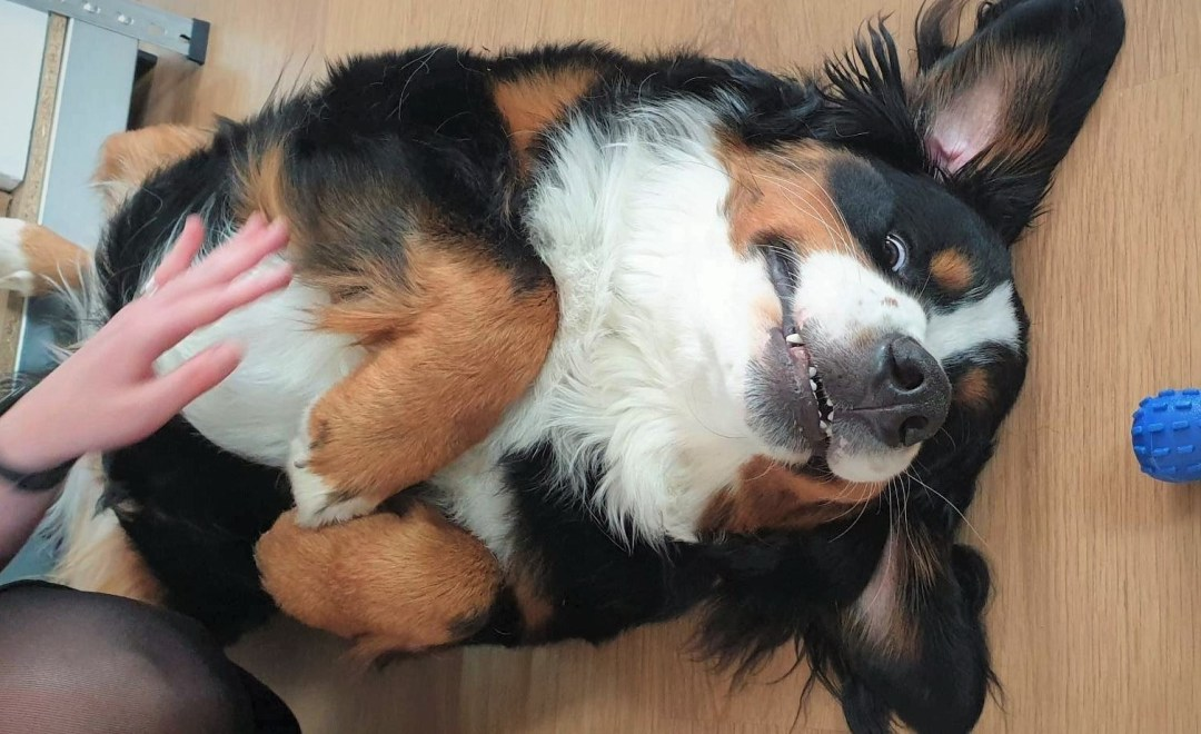 IT Positive dog - Barney