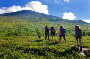 Allt fler vill vandra och uppleva naturen i sommar 1