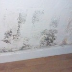 toxic mold on wall feature image