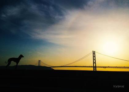 明石海峡大橋と僕。|イタグレ