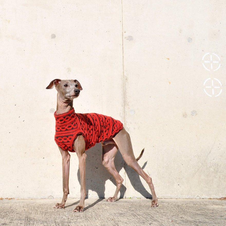 イタグレにシンプルで大人な印象のお洋服を選んでみました-イタグレ服とBuono!の暮らし | Italian Greyhound Buono!