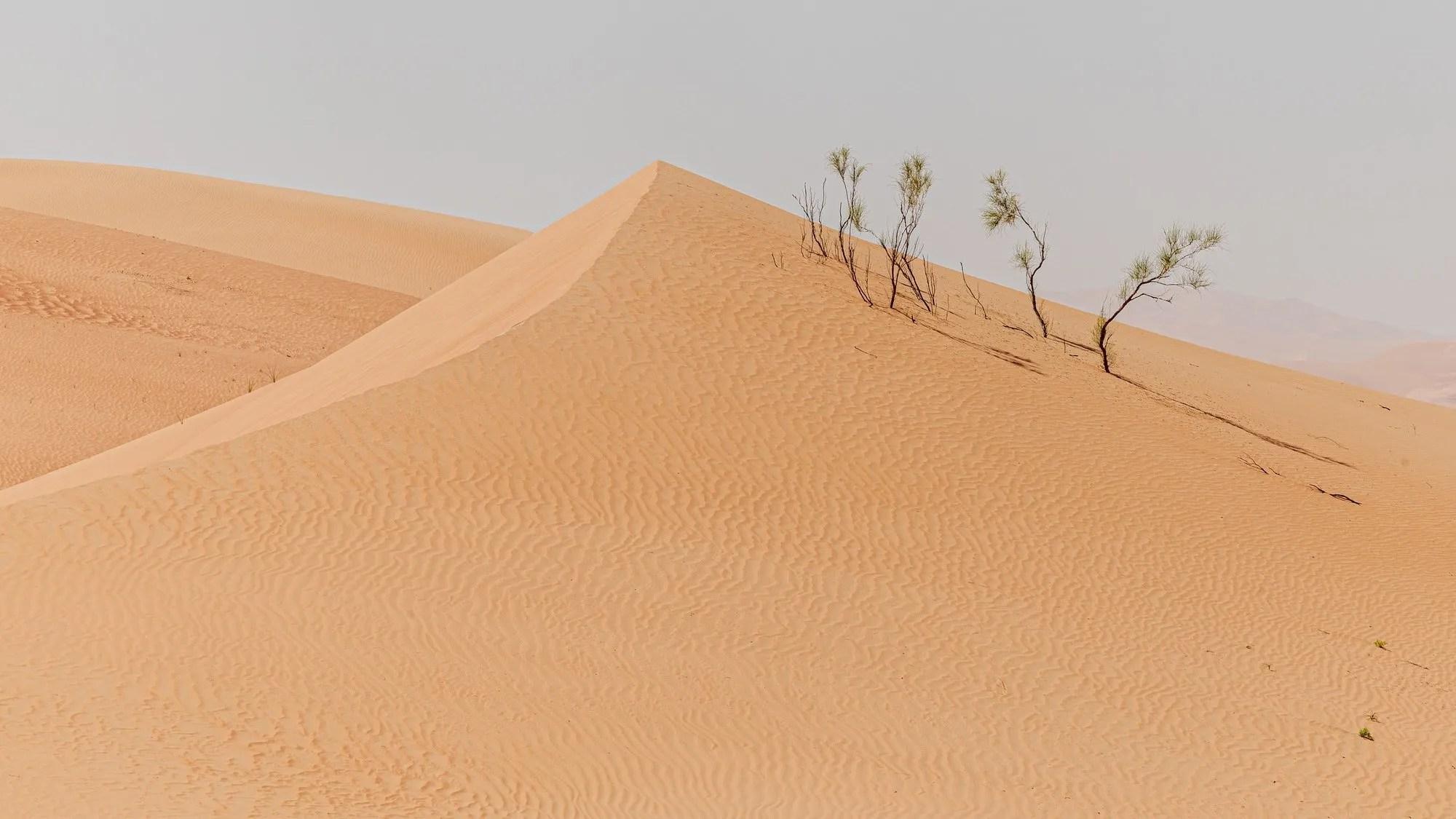 Sundown in desert. Desert background.