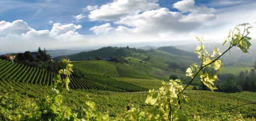 landscape Piemonte vineyards