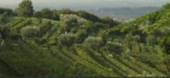Video Rai.TV - Signori del vino - Signori del vino del 21_03_2015 - Veneto