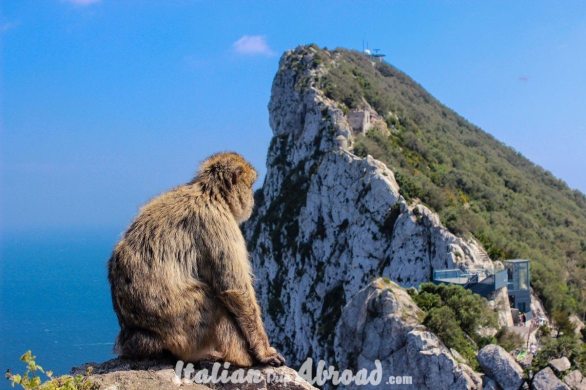 1 day in Gibraltar - Tour of Gibraltar - Top of the rock sightseeing tour