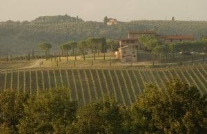 122398653-Tuscan hills and vineyards