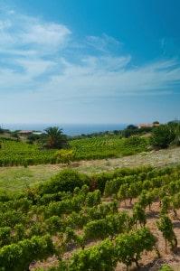 167289165-Seaside vineyard