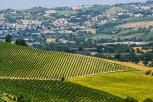 177870262-Vineyards near Ancona, Marche