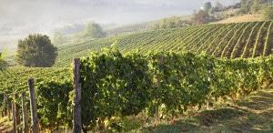 178490461-Astigiano vineyards, Piedmont
