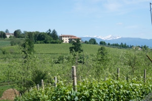491958969-Vineyard and Dolomites