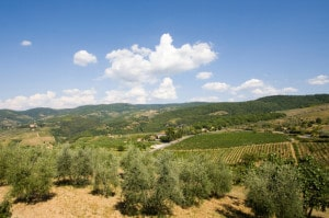 496473509-Tuscan hills and vineyards and olive trees