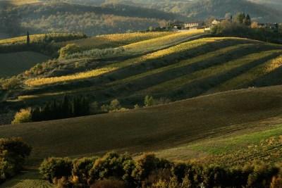 Chianti Classico vineyards (consorzio)